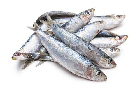 sardines-480x320